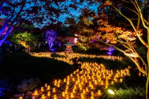 Canberra Nara Candle Festival - Accommodation Directory